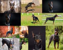 国外警犬摄影时时彩娱乐网站