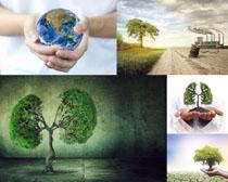 环境保护树木摄影高清图片
