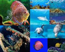 海底生物拍摄时时彩娱乐网站