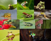 青蛙与荷叶摄影时时彩娱乐网站