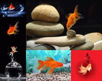 石头与金鱼摄影时时彩娱乐网站