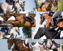 奔跑的马匹摄影时时彩娱乐网站