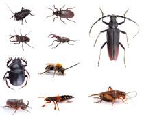 昆虫写真摄影时时彩娱乐网站