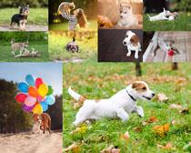 草地玩耍的狗狗摄影时时彩娱乐网站