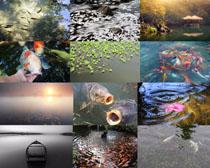 池塘里的鱼摄影时时彩娱乐网站