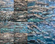 海洋馆中的鱼摄影时时彩娱乐网站