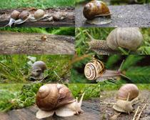 野外蜗牛摄影时时彩娱乐网站