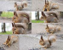 可爱小松鼠摄影时时彩娱乐网站