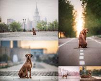 道路写真狗狗摄影时时彩娱乐网站