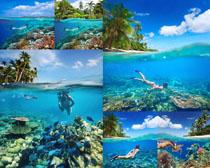 美丽的海底世界摄影高清图片