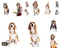 装扮的狗狗摄影时时彩娱乐网站