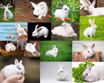 可爱小兔子摄影时时彩娱乐网站