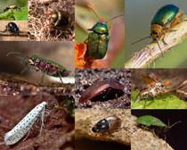 昆虫动物摄影时时彩娱乐网站