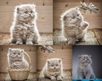 可爱的猫咪写真摄影时时彩娱乐网站