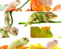 变色动物摄影时时彩娱乐网站