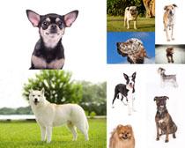 聪明的宠物狗摄影时时彩娱乐网站