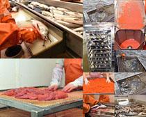 海鲜鱼类摄影时时彩娱乐网站