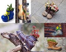 创意鞋子花盆摄影时时彩娱乐网站