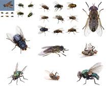 苍蝇昆虫摄影时时彩娱乐网站