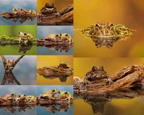 水中的青蛙摄影时时彩娱乐网站