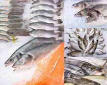 冰冻海鲜鱼摄影时时彩娱乐网站