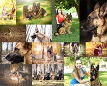 狼狗动物摄影时时彩娱乐网站