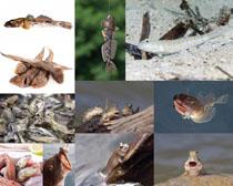 野生鱼类摄影时时彩娱乐网站