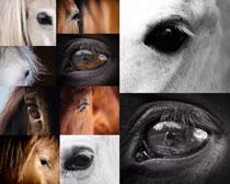 马的眼晴摄影时时彩娱乐网站