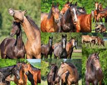 一群马动物摄影时时彩娱乐网站