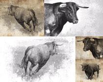 公牛手绘画摄影时时彩娱乐网站