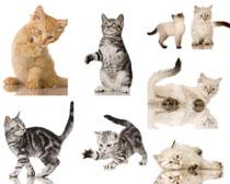 活动的猫咪摄影时时彩娱乐网站