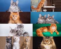 眼神猫咪摄影时时彩娱乐网站