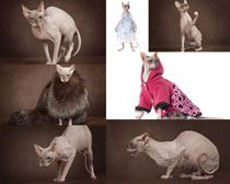 神奇的猫摄影时时彩娱乐网站