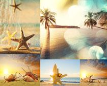 海星与大海风景摄影高清图片