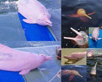 可爱的海豚摄影时时彩娱乐网站