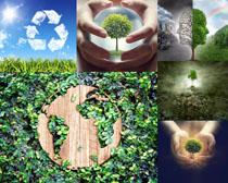 环保植物风光摄影高清图片