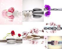 石头与花朵背景摄影高清图片