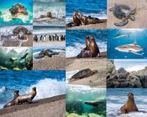 海豹与海龟摄影时时彩娱乐网站