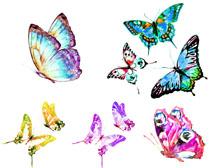 美丽的色彩蝴蝶摄影时时彩娱乐网站
