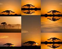 夕阳风景与树木摄影高清图片