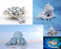 珍珠与贝壳摄影时时彩娱乐网站