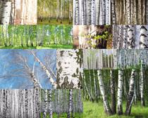 林间树木摄影高清图片