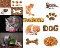 猫咪与食物摄影时时彩娱乐网站