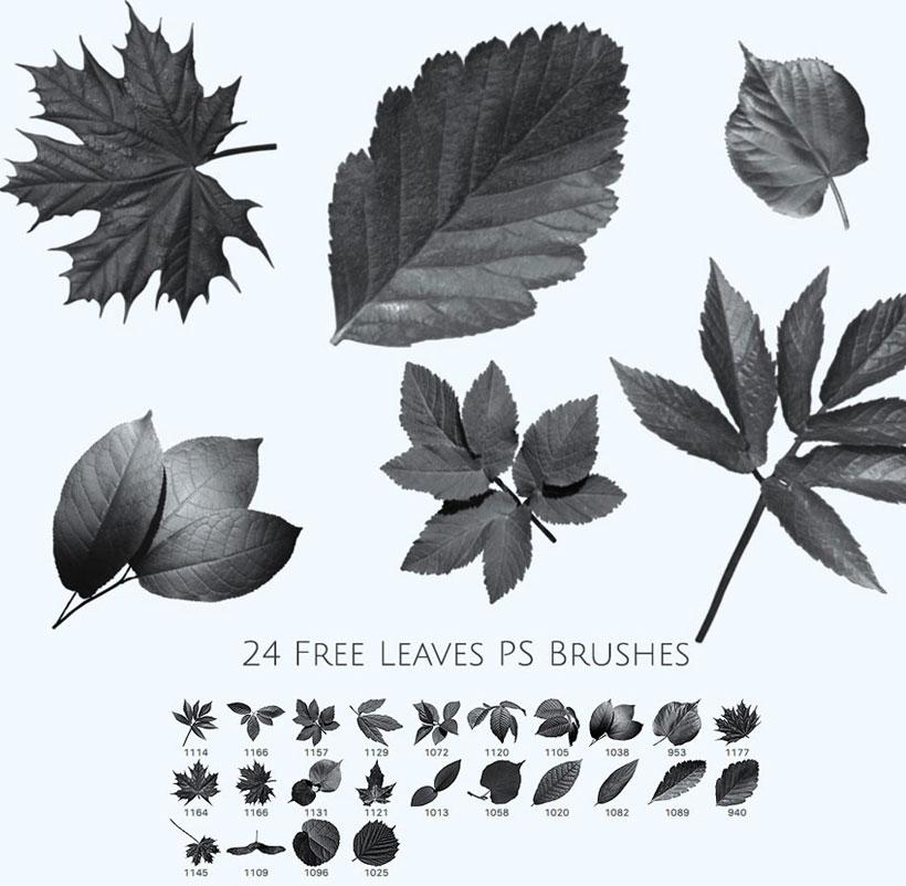 关于叶子的设计意图