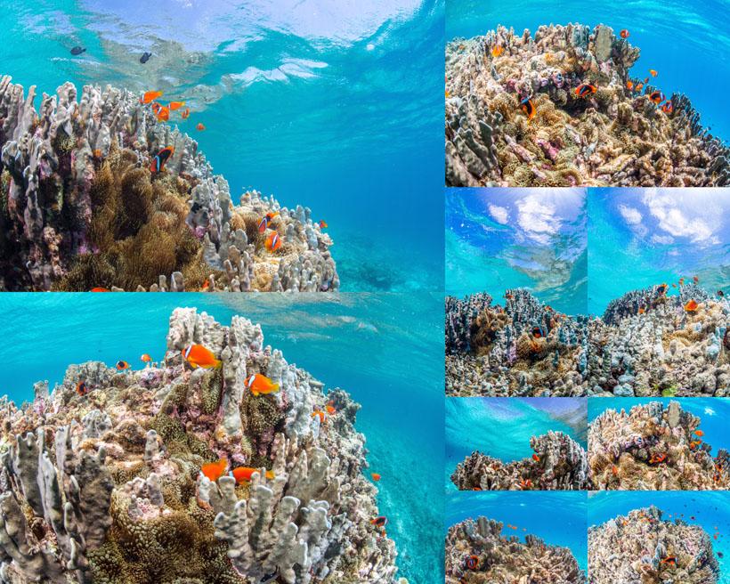 海底风光摄影高清图片
