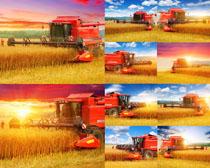 稻田丰收收割机摄影高清图片