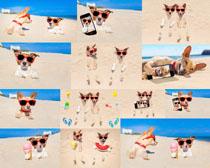 沙滩与可爱狗狗摄影时时彩娱乐网站