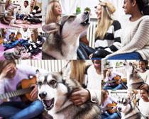 宠物犬拍摄时时彩娱乐网站