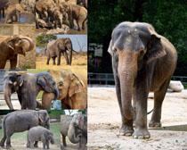 大象动物拍摄时时彩娱乐网站