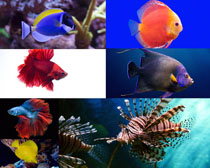 漂亮的海底鱼摄影时时彩娱乐网站
